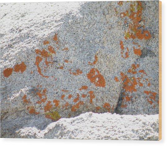 Joshua Tree Orange Lichen Wood Print by Claire Plowman