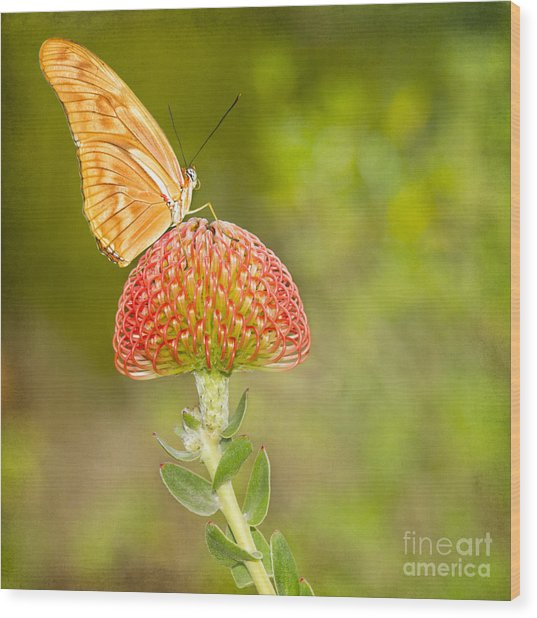 Julia Longwing Butterfly On Exotic Flower Wood Print