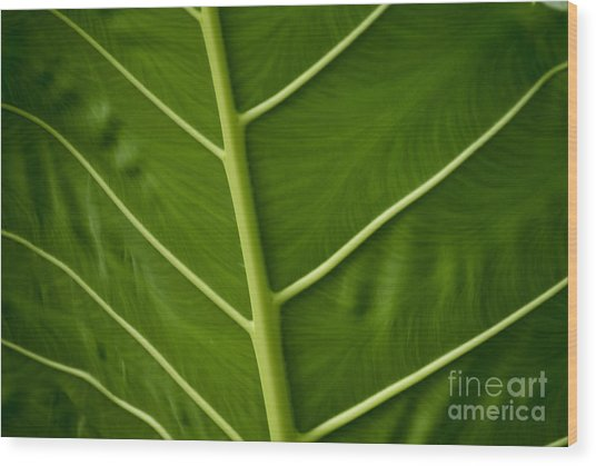 Jungle Leaf Wood Print