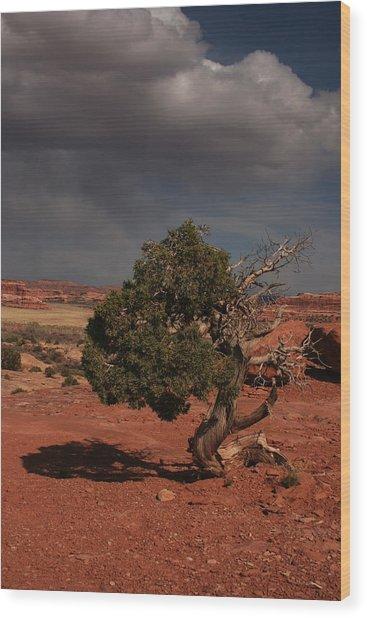 Juniper Canyonlands National Park Wood Print