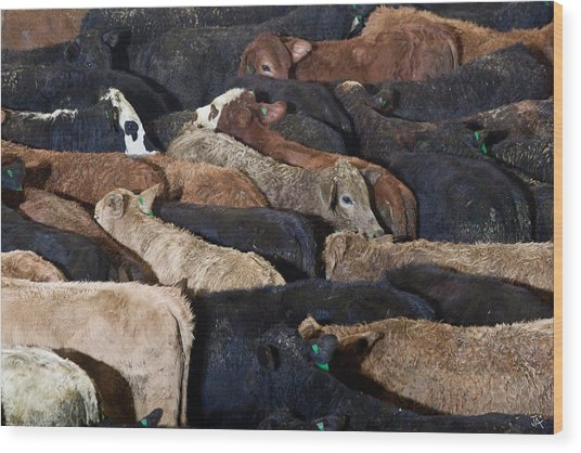 Just Cattle Wood Print