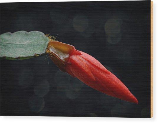 Just Flower Vi Wood Print