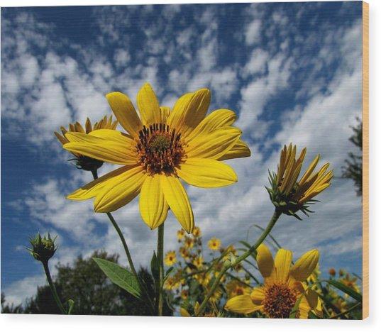 Kansas Sunflower Wood Print by Ed Golden