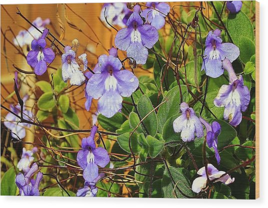 Kathy's Violets From Australia Wood Print