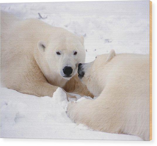 Kissing Bears Wood Print