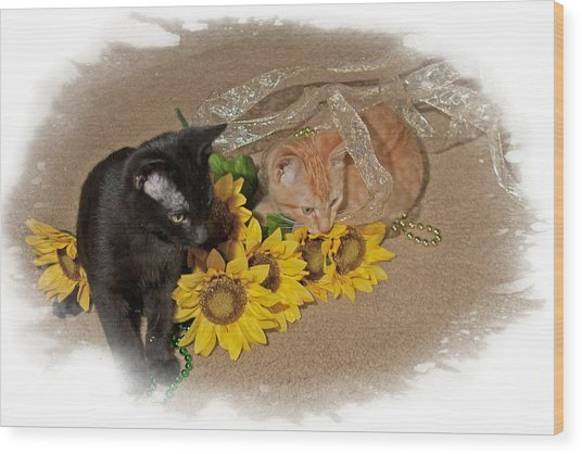 Kittens And Sunflowers Wood Print