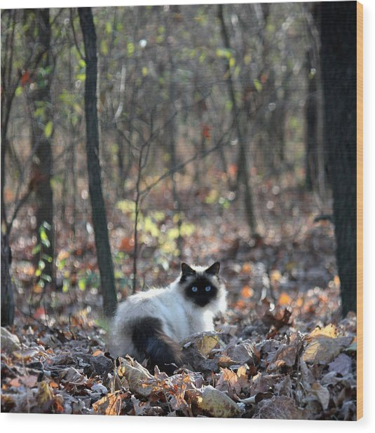 Kitty And Bokeh Wood Print