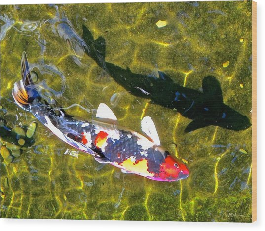 Koi With Shadow Wood Print by Brian D Meredith