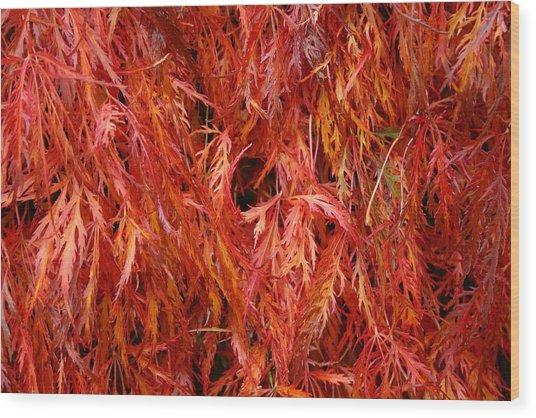 Laceleaf Fire Wood Print