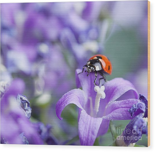Ladybug And Bellflowers Wood Print