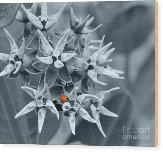 Ladybug Flower Wood Print