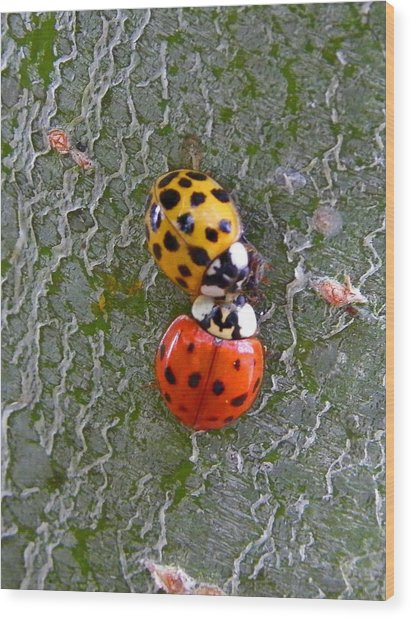 Ladybug Love Wood Print by Judy Wanamaker