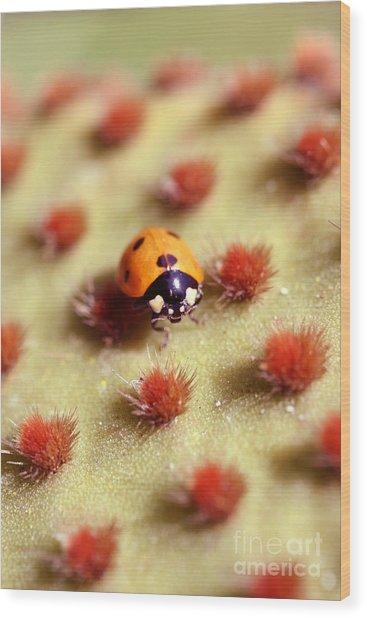 Ladybug2 Wood Print