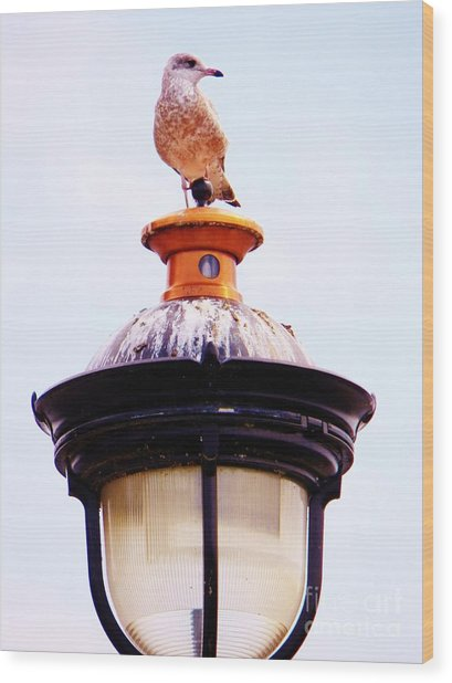 Lampost Gull   One Wood Print by Judy Via-Wolff