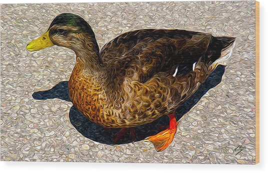 Land Duck Wood Print