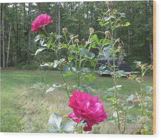 Last Roses Of The Summer For Mother  Wood Print
