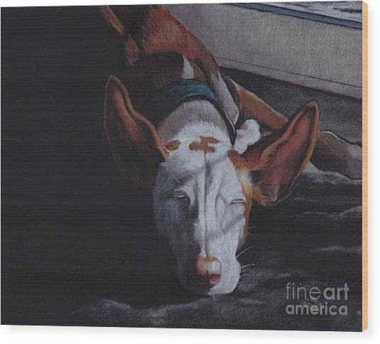 Late Afternoon Nap Wood Print by Charlotte Yealey