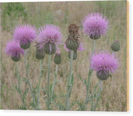 Lavendar Thistles In Bloom Wood Print