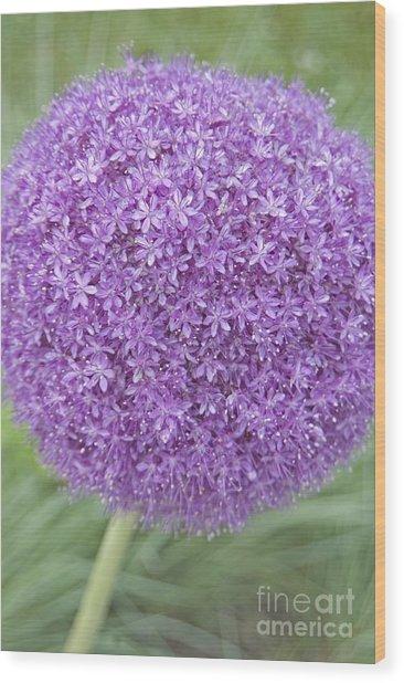 Lavender Ball Wood Print