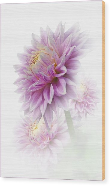 Lavender Dahlia Wood Print