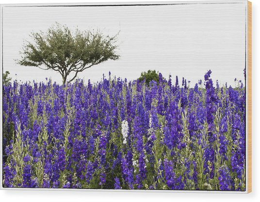 Lavender Field Wood Print