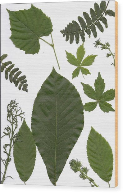 Leaf Collage II Wood Print by Mary Ann Southern