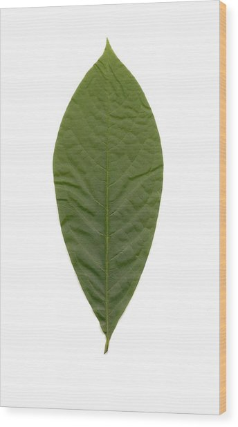 Leaf Of Pawpaw Wood Print by Mary Ann Southern