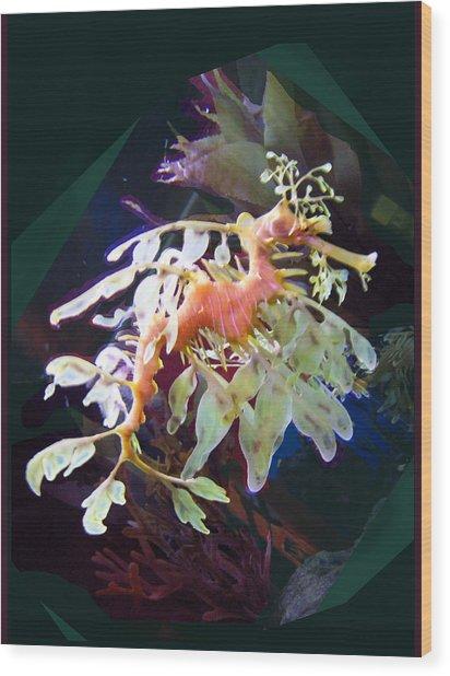 Leafy Sea Dragon Wood Print