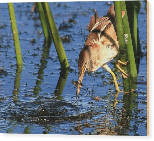 Least Bittern With A Molly Wood Print