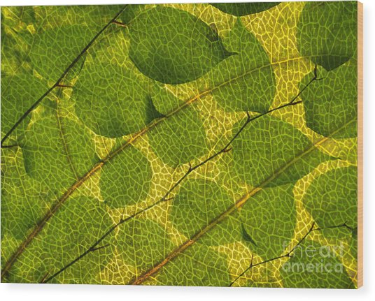 Leaves Wood Print