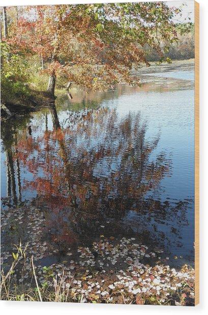 Leaves Of Reflections Wood Print by Kim Galluzzo Wozniak