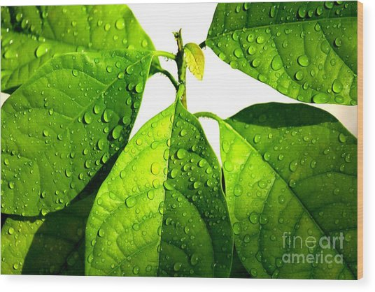 Leaves With Raindrops Wood Print by Theresa Willingham