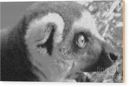 Lemur Ll Wood Print by John From CNY