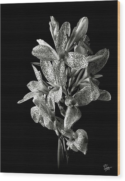 Leopard Lily In Black And White Wood Print