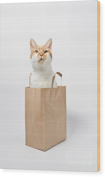 Letting The Cat Out Of The Bag Wood Print by Catherine MacBride