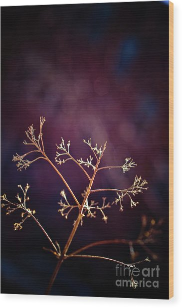 Light 1 Wood Print by Rossi Love