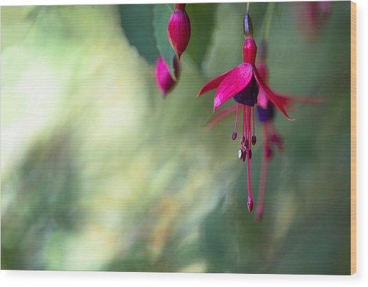 Fuchsia Magic Wood Print