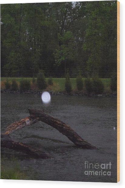 Light On A Limb Wood Print