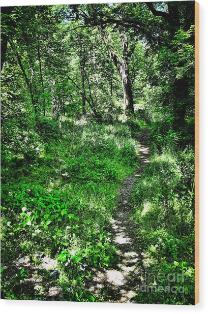 Lighted Path Wood Print by Colleen Kammerer