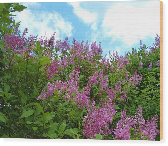 Lilacs In Rochester Ny Wood Print by Jeanette Oberholtzer