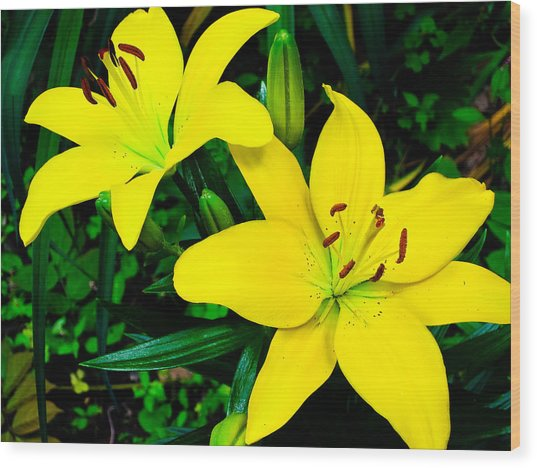 Lilies Wood Print by Michael Ray