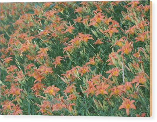 Lilies Of The Field Wood Print