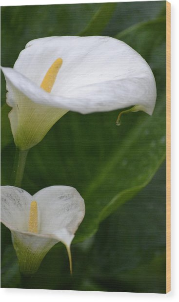Lillies Wood Print by Dickon Thompson