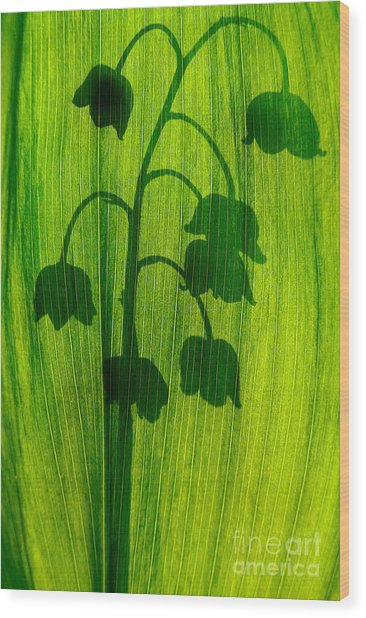 Lily Fo The Valley Wood Print by Odon Czintos