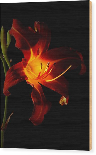 Lily In The Light Wood Print