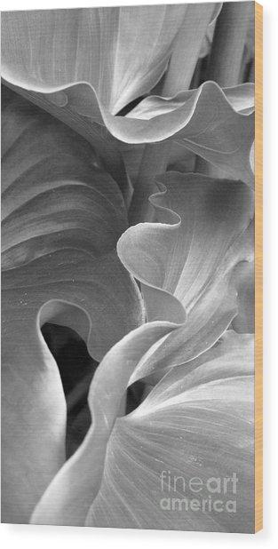 Contours Wood Print
