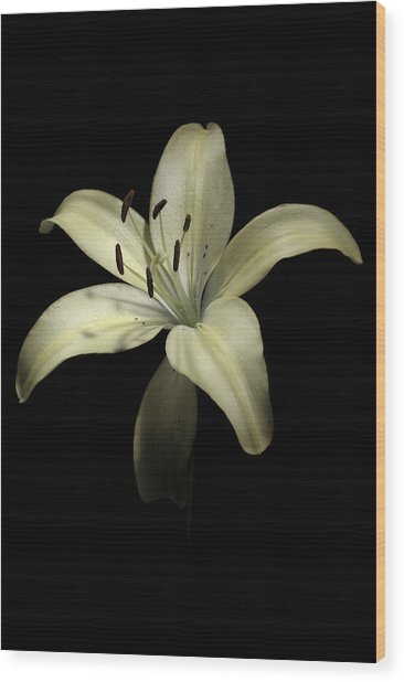 Lily Wood Print by Nathaniel Kolby