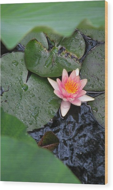 Lily Pad II Wood Print by Suzanne Fenster