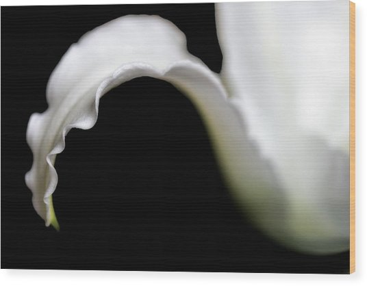 Lily Petal From A Side View Wood Print