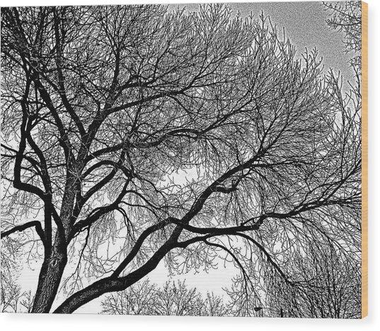 Limbeaux Wood Print by Dan Stone